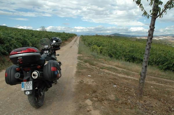 Entre las viñas de Ponferrada