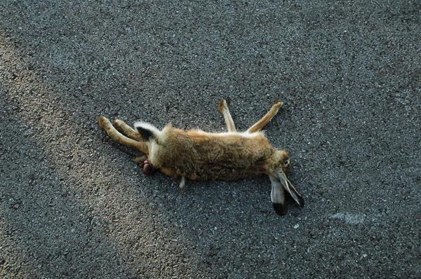 Bugs Bunny is dead
